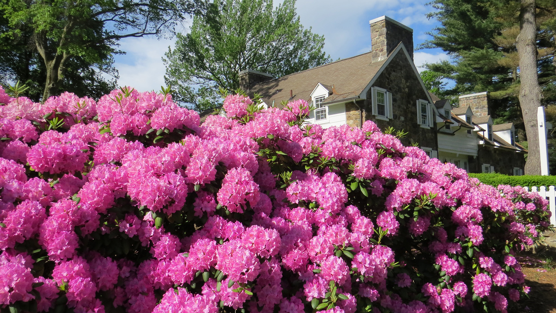 Glenhill Farmhouse Rhododendrons