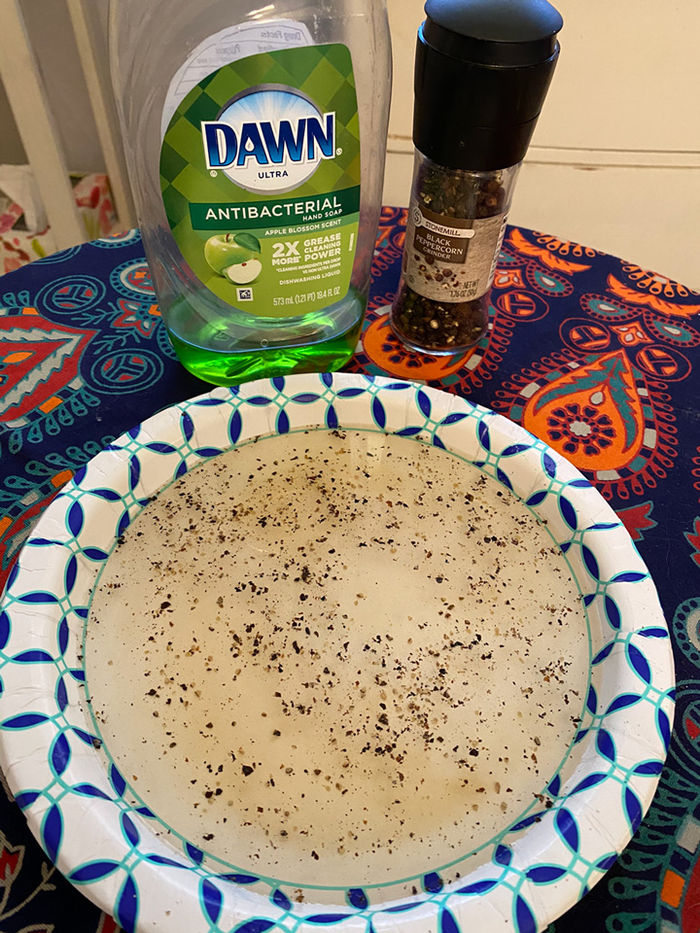 Dishwashing soap and a paper plate with water and black pepper.
