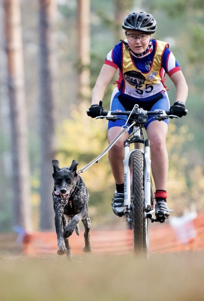 Penn State Behrend student Emily Ferrans competes in a mountain bike race while tethered to her dog, Marge