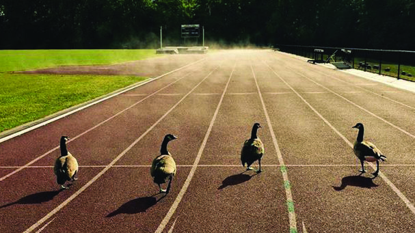Harborcreek Township resident Karen Beebe captured a fabulous photo of four geese on the college's outdoor track after a morning rain.