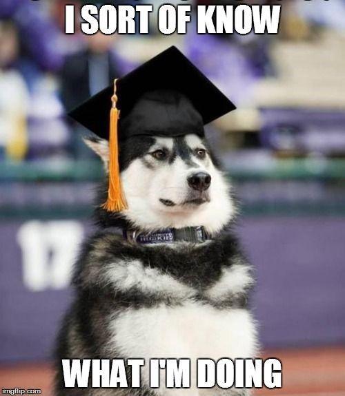 """I sort of know what I'm doing, graduation dog"
