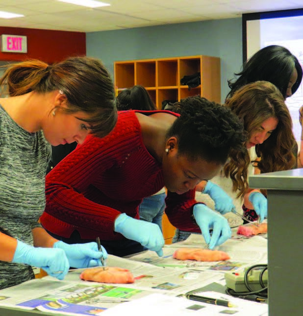 Students work on severed pig's feet at a two-hour suturing seminar offered by the Army Health Care Recruiting office in Pittsburgh and held at Penn State Behrend.