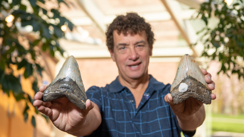 A man holds up two Megalodon shark teeth.
