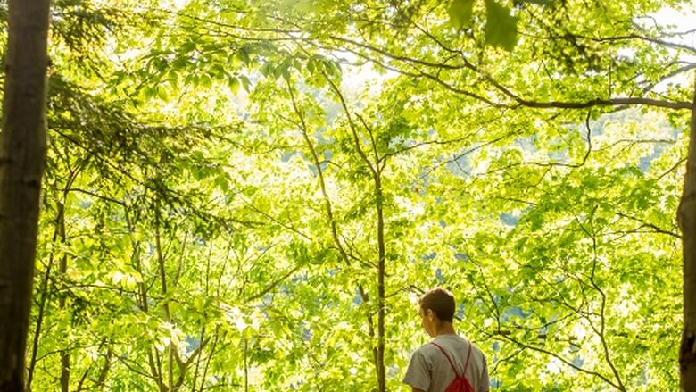 A student looks out over Wintergreen Gorge at Penn State Behrend.