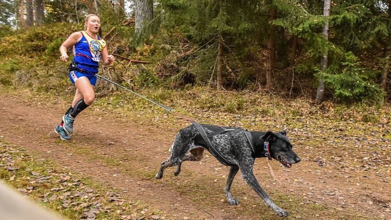 Penn State Behrend student Emily Ferrans runs in a canicross race with her dog, Marge.