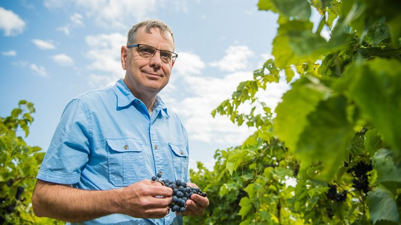 Penn State Behrend faculty member Michael Campbell stands in a grape vineyard.