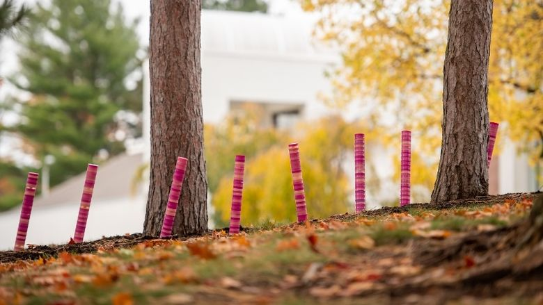 Stacked plastic discs create an art sculpture in a Penn State Behrend tree line.