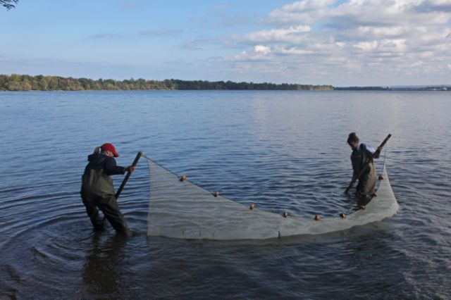 Two researchers use a seine net to collect samples in a lake.