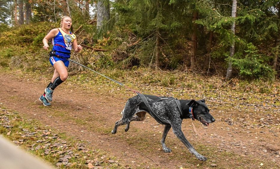 Penn State Behrend student Emily Ferrans runs in a canicross event with her dog, Marge