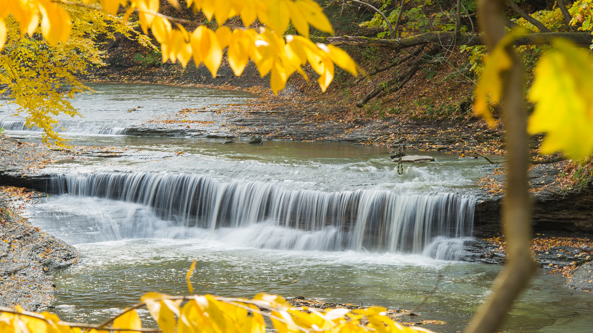A waterfall at Wintergreen Gorge framed by yellow autumn leaves